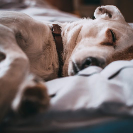 spánek na míru